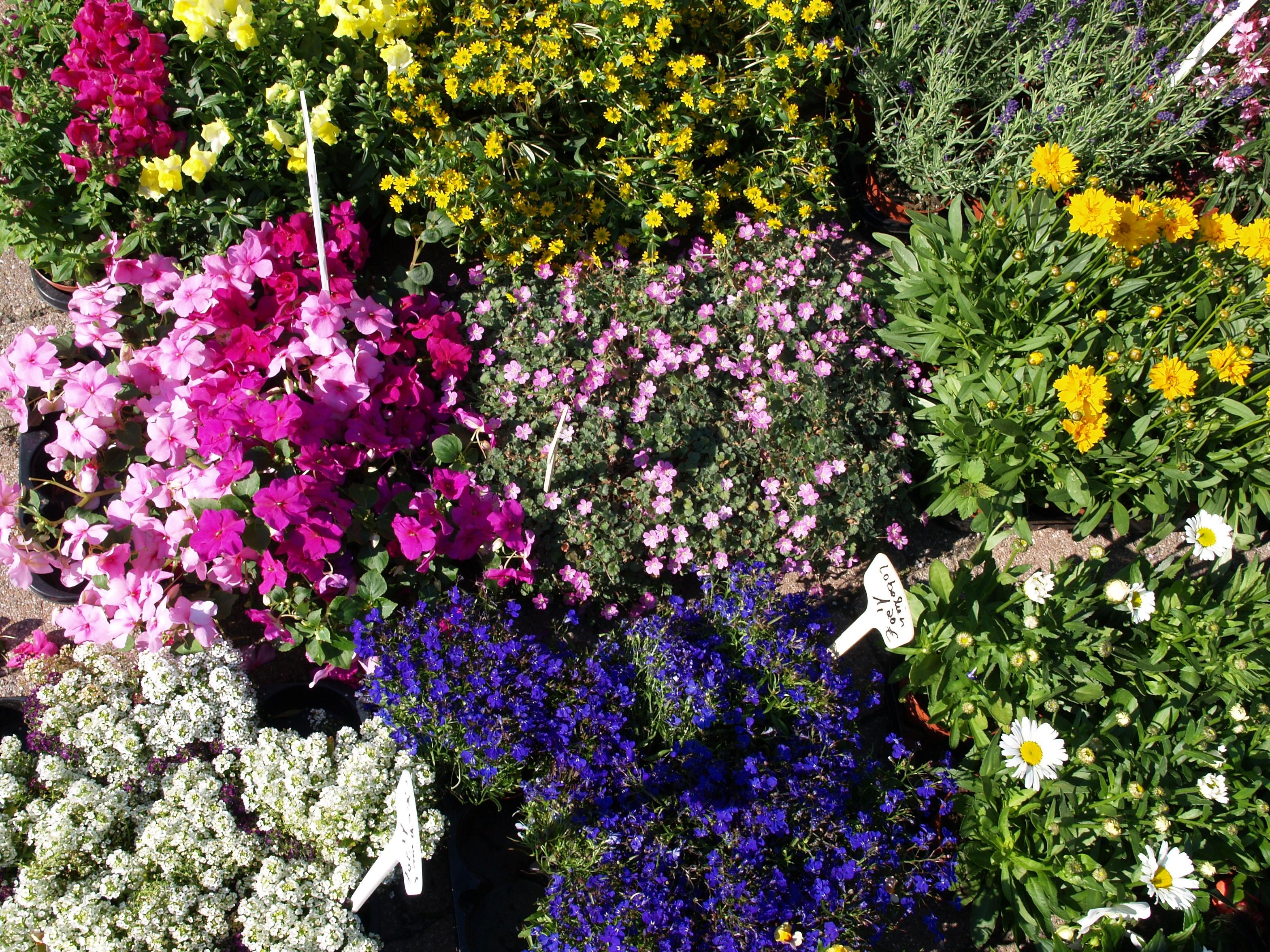 Blumenkisten